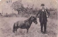 Owner With Mini Baby Horse Donkey Antique Worn Postcard