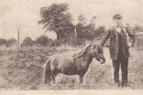 Pony Dick Guiness Book Of Records Smallest Ever Horse Animal Antique Postcard