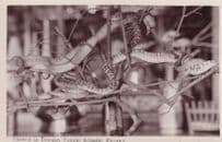 Real Live Snakes in Sungei Kluang Penang Malaysia Old RPC Postcard