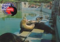 Residents Pool Cornish Seal Sanctuary Postcard