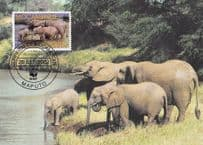 Savannah Elephant Mocambique Rare WWF Stamp First Day Cover Postcard