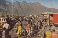 South African Snoek Hout Bay Cape Postcard