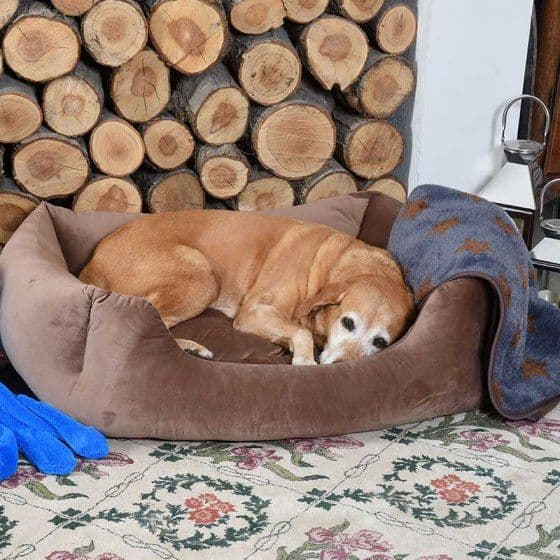 Latte Velour Square Dog Bed